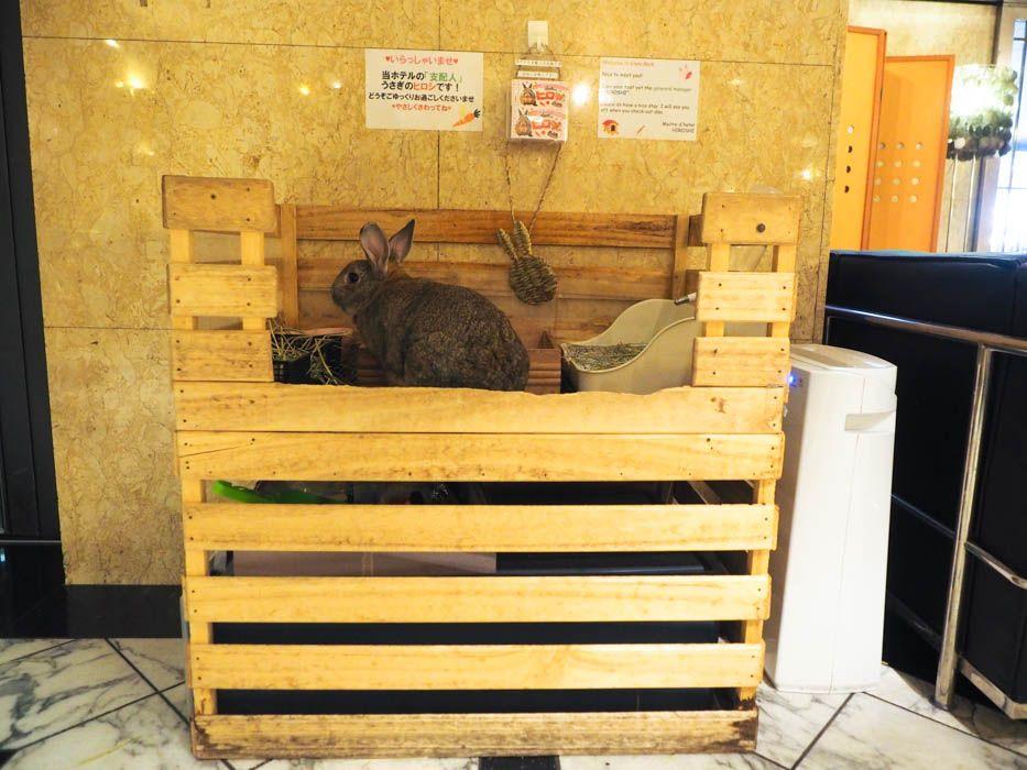大阪・アメリカ村にある、うさぎ萌えのホテル