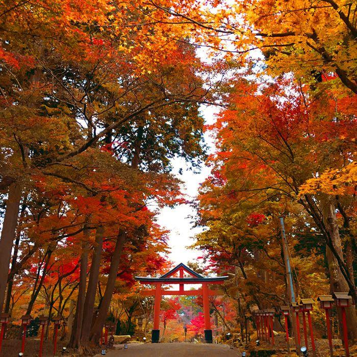 「日吉大社」は紅葉シーズンがオススメ