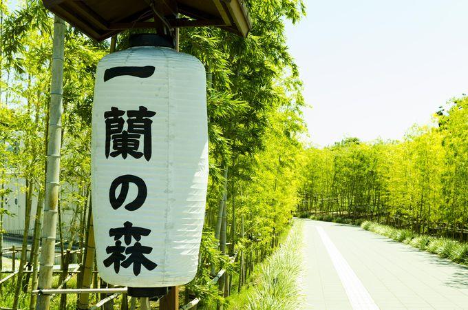 東京ドーム2つの敷地を誇るラーメンのテーマパーク
