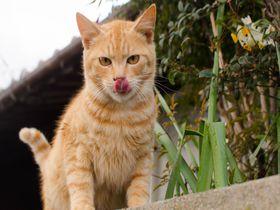 世界も認めたハート型のネコの楽園!福岡県「相島」|福岡県|トラベルjp<たびねす>