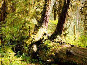 まるでジブリの世界!米「ホー・レインフォレスト」一面に広がる緑の絨毯は圧巻