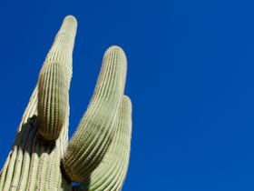 ニョロニョロにミッキー?アリゾナの不思議穴場スポット「サワロ国立公園」