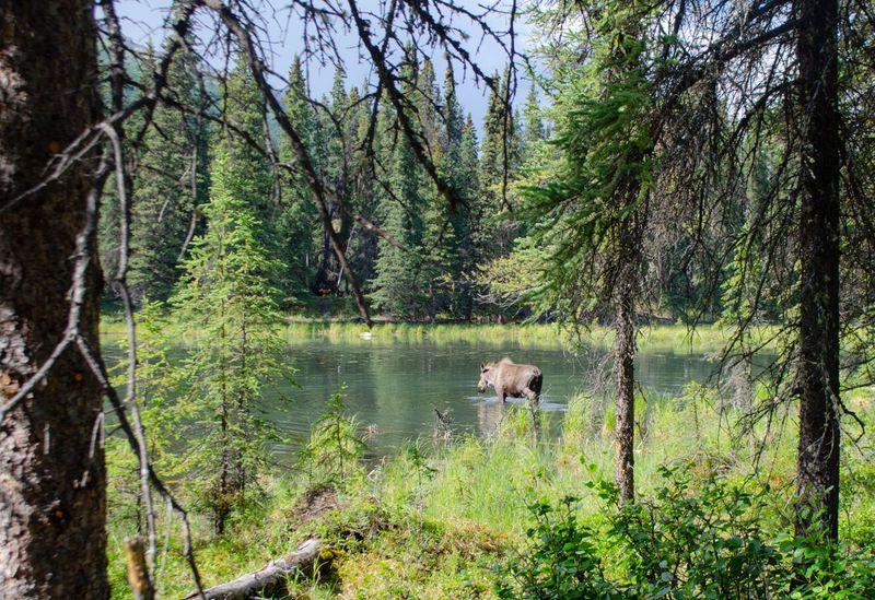 アウトドア天国!アラスカ・デナリ国立公園の楽しみ方