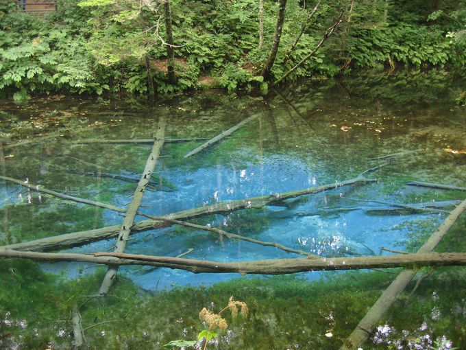 必見!! 摩周湖の地下水を湛えるコバルトブルーの池