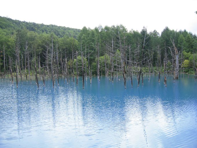 名前の通り青い!「青い池」
