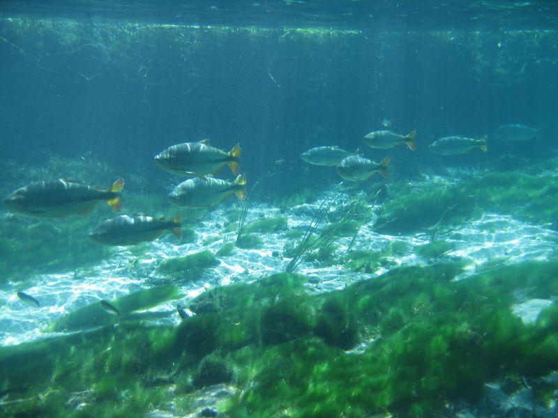 透明度世界一の川?!ブラジル・ボニートの川でシュノーケル!!