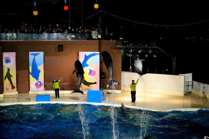 夜景をバックにイルカがジャンプ!!夜の下関市立水族館「海響館」