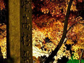 山口県(西部)の紅葉ライトアップスポット3選・いつもと違う夜の紅葉を見に行きませんか!!
