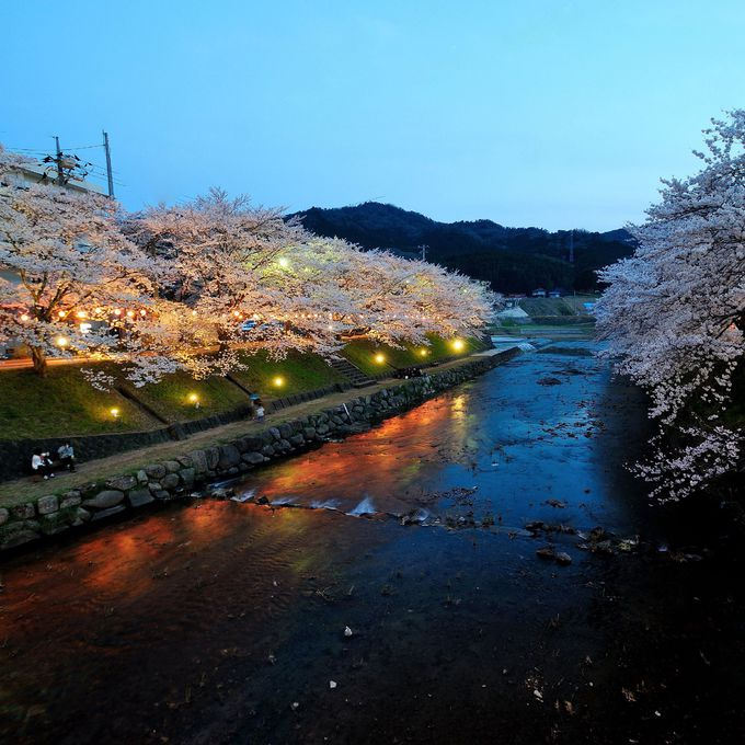 美祢(みね)さくら公園の桜並木