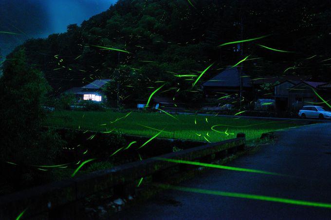 佐波川の支流・三谷川は山まで光る!!
