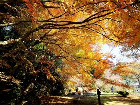 立ち尽くすほどに美しい!! 絶景の紅葉・美祢市「南原寺」|山口県|トラベルjp<たびねす>