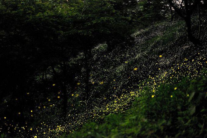 光の点滅は、自然のイルミネーション!!