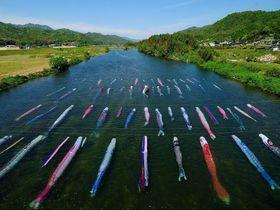 鯉が泳ぐのはやっぱり水の中!? 佐波川の「水中鯉のぼり」~山口県|山口県|トラベルjp<たびねす>