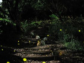 神秘的な光に吸い込まれる!! ヒメボタル観賞の名所「竜王山」|山口県|トラベルjp<たびねす>