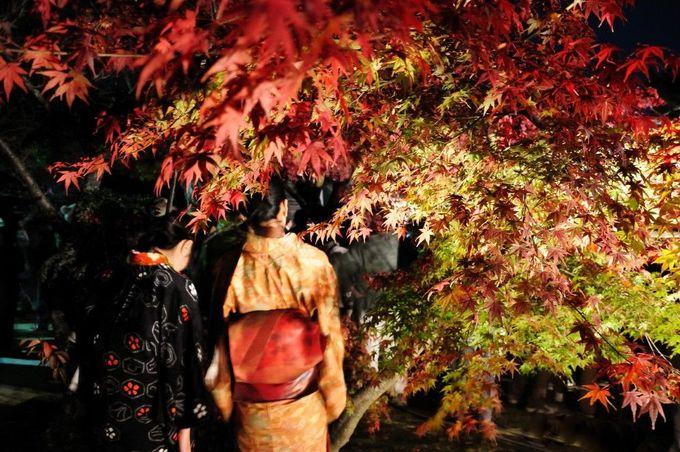 功山寺では山門周辺の紅葉が圧巻