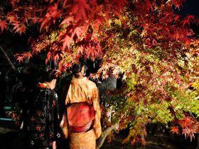 キャンドルイベントと夜の紅葉を楽しむ!!下関「彩りの城下町長府 秋」|山口県|トラベルjp<たびねす>