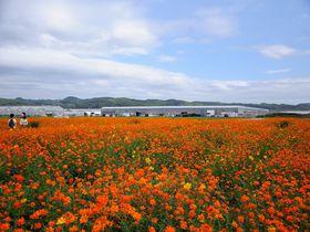 まさに「花の海」! 山口県・西日本最大級のシステム農場で広大な花畑を満喫|山口県|トラベルjp<たびねす>