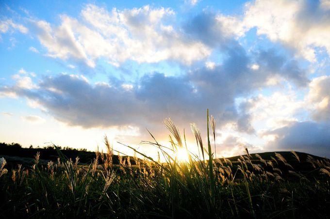 秋の「秋吉台」はススキの絶景を満喫できる絶好のスポット!!