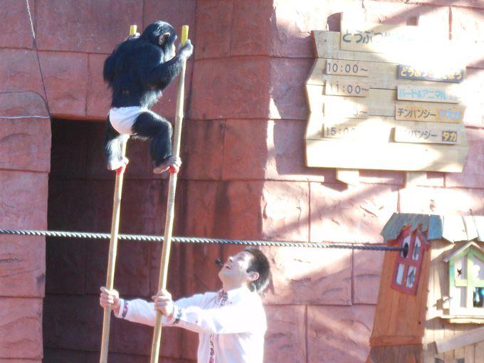 チンパンジーの能力に感心!! 大講堂で繰り広げられる「チンパンジー学習発表会」