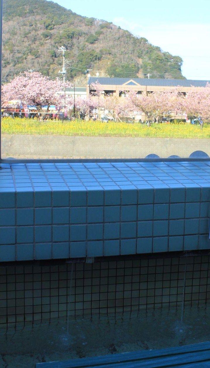 河津桜も温泉も!2つの河津名物を同時に楽しめる足湯処