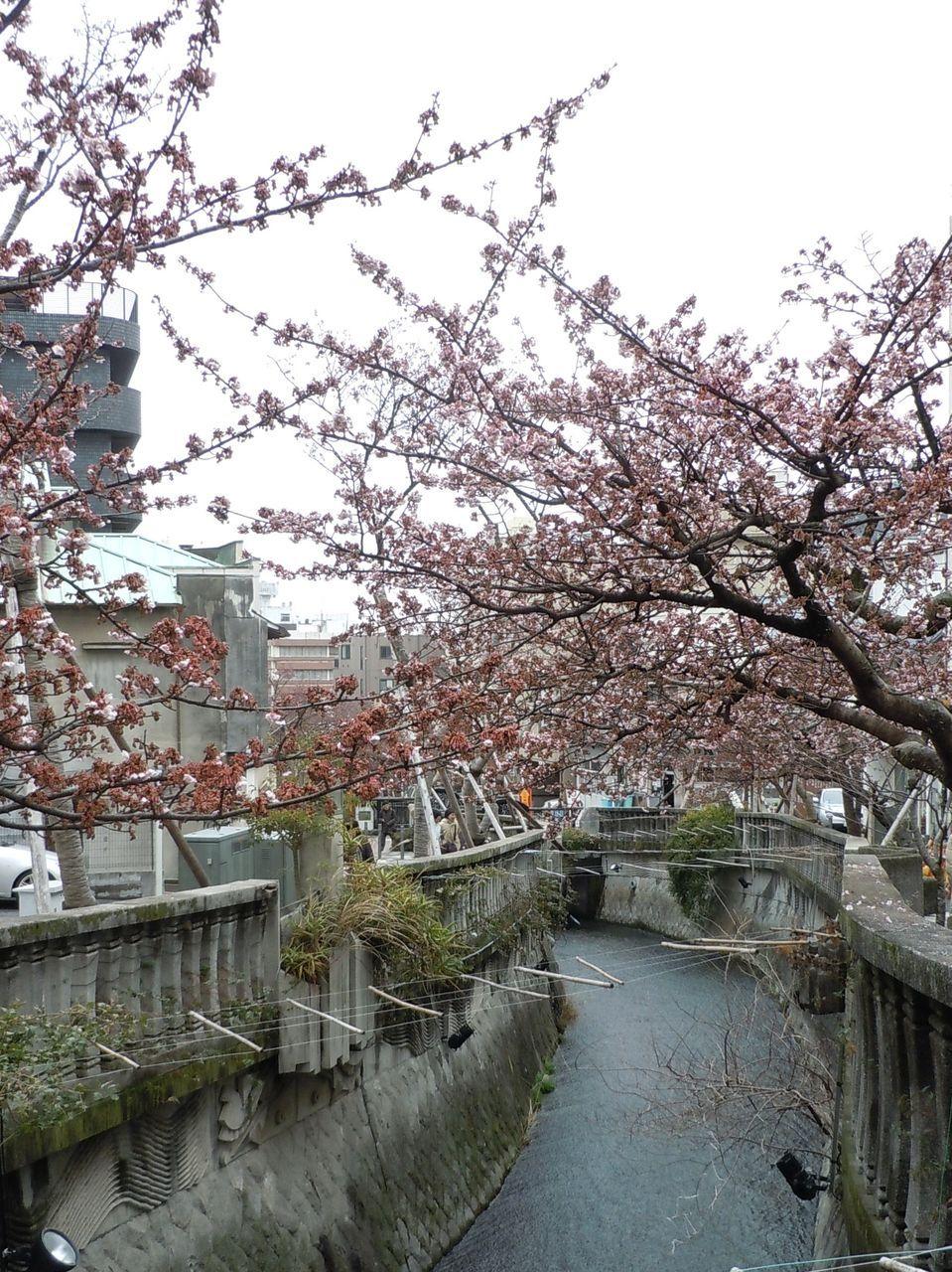 あたみ桜の見所は、ここから