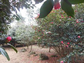 伊豆随一!360度の絶景と1000種4000本の椿が咲く「小室山」~伊東市|静岡県|トラベルjp<たびねす>
