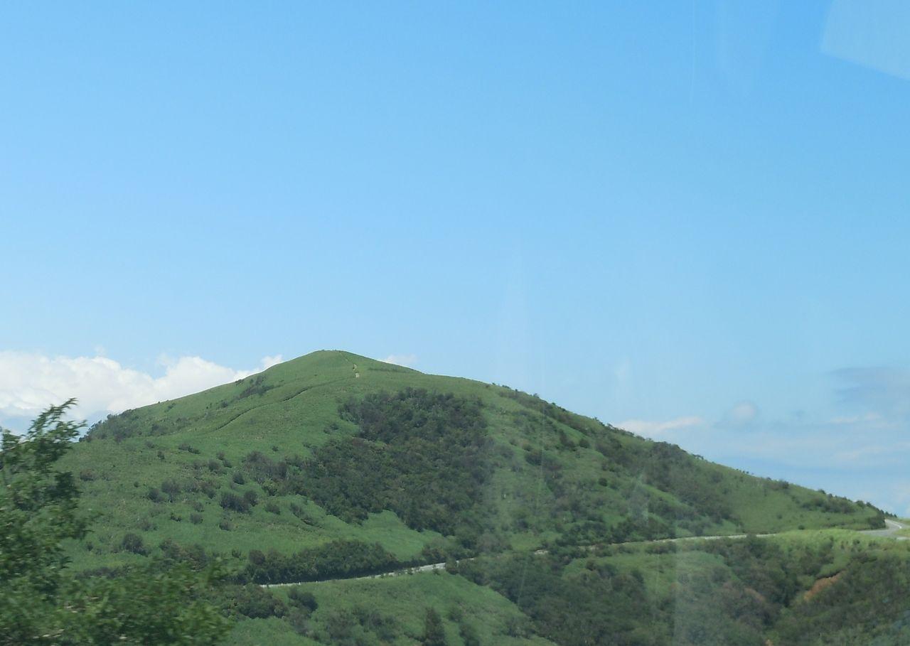緑が美しい達磨山