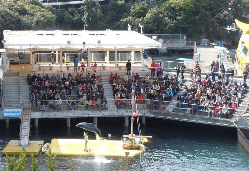 世界初のイルカ水族館「伊豆・三津シーパラダイス」のショーは凄いぞ!!