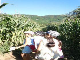 とうもろこし畑の巨大迷路で大冒険!!酪農王国オラッチェ~函南町~|静岡県|トラベルjp<たびねす>