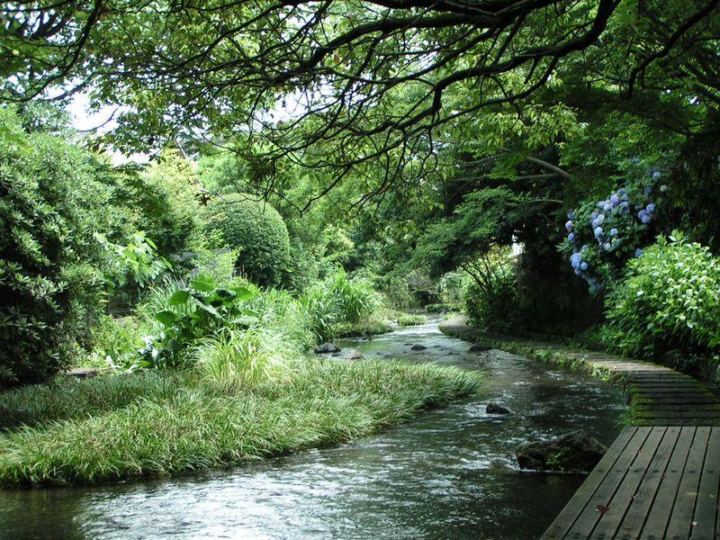 平成の名水百選!水の都、三島市『源兵衛川』で涼を体感!