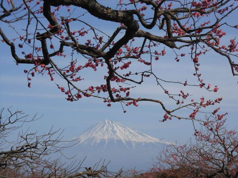 写真愛好家が集まる、富士山絶好撮影スポット!富士市岩本山公園