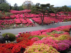 つつじの絨毯!?10万本も埋め尽くす「伊東小室山つつじ祭り」|静岡県|トラベルjp<たびねす>