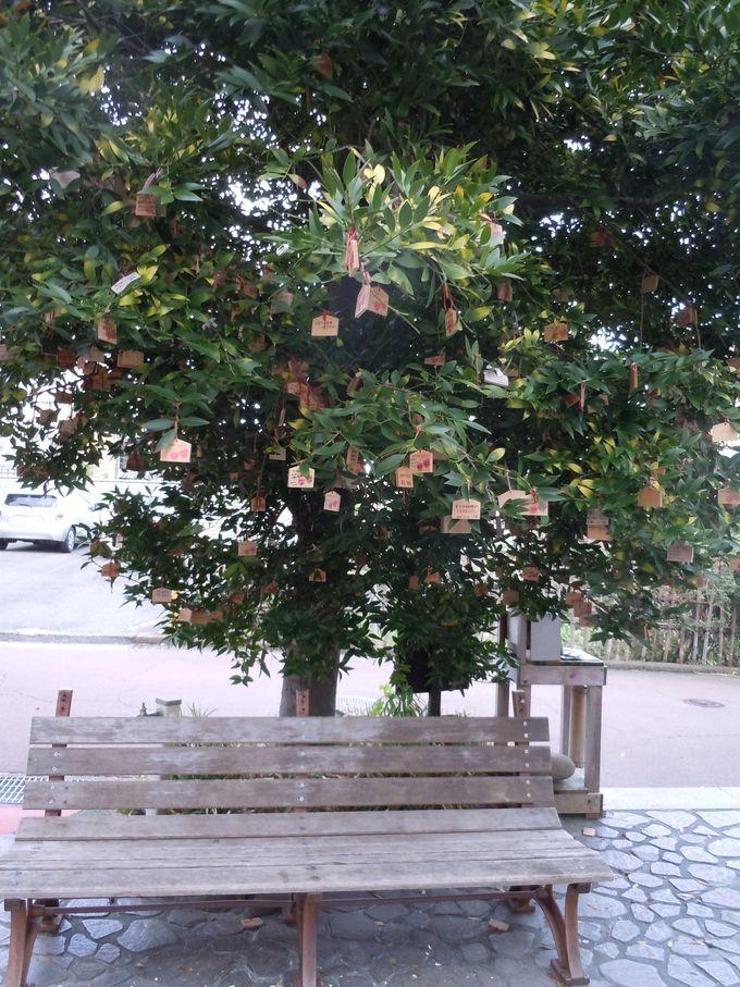 神様が宿る不思議な木!?