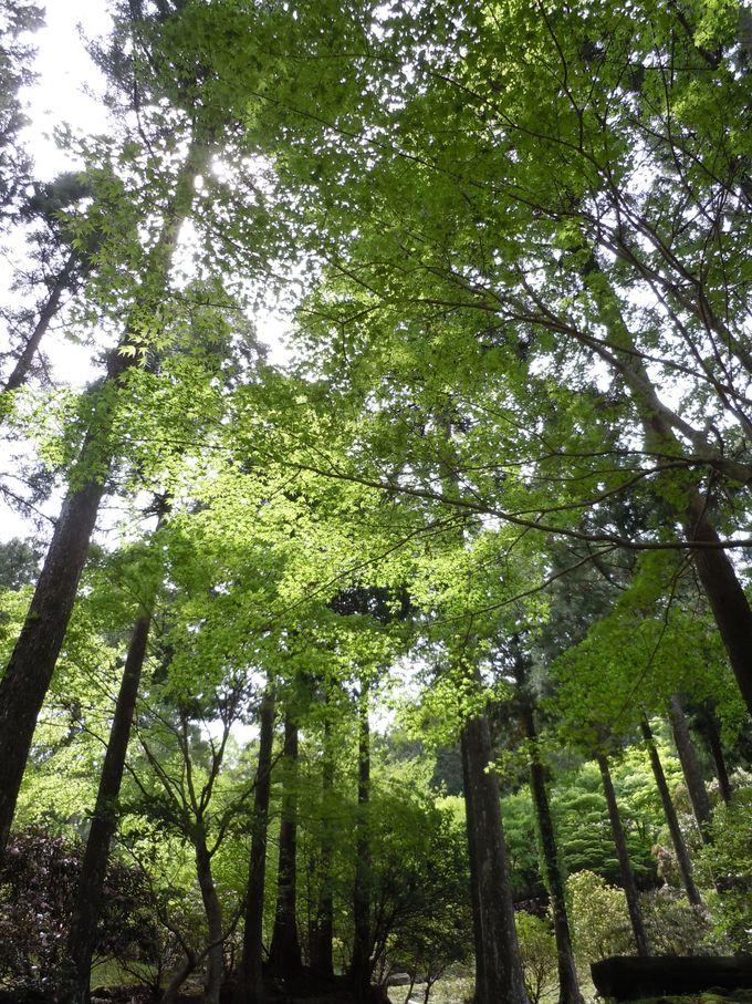 リラックス効果抜群の自然林!