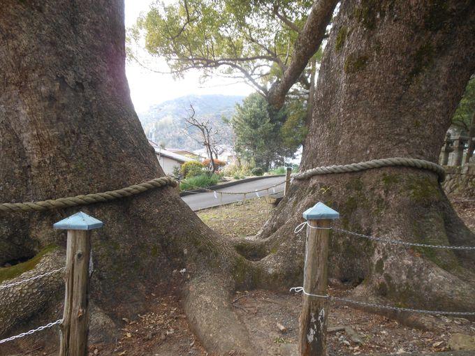 見るだけでも幸せ気分?!心をハッピーにする魔法の木