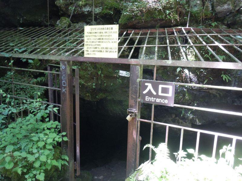 富士山麓で最大級の洞穴!神秘に満ちた山梨「西湖コウモリ穴」