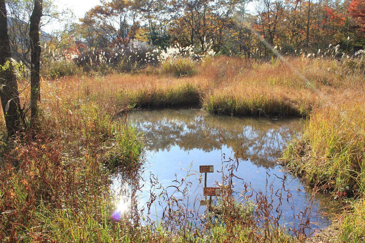 珍しい植物や山野草も見ることができる「仙石原温泉 ホテルハーヴェスト箱根甲子園」