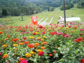 夏はファミリーリゾートに変身!長野「ホテルハーヴェスト斑尾」|長野県|トラベルjp<たびねす>