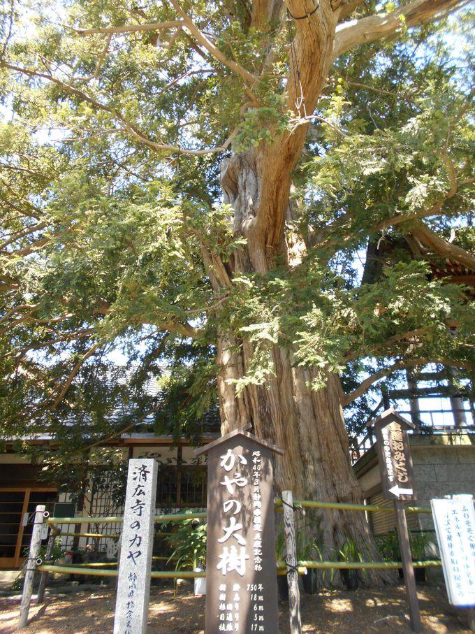 満ち溢れる生命力を体感!パワーをもらえる大樹