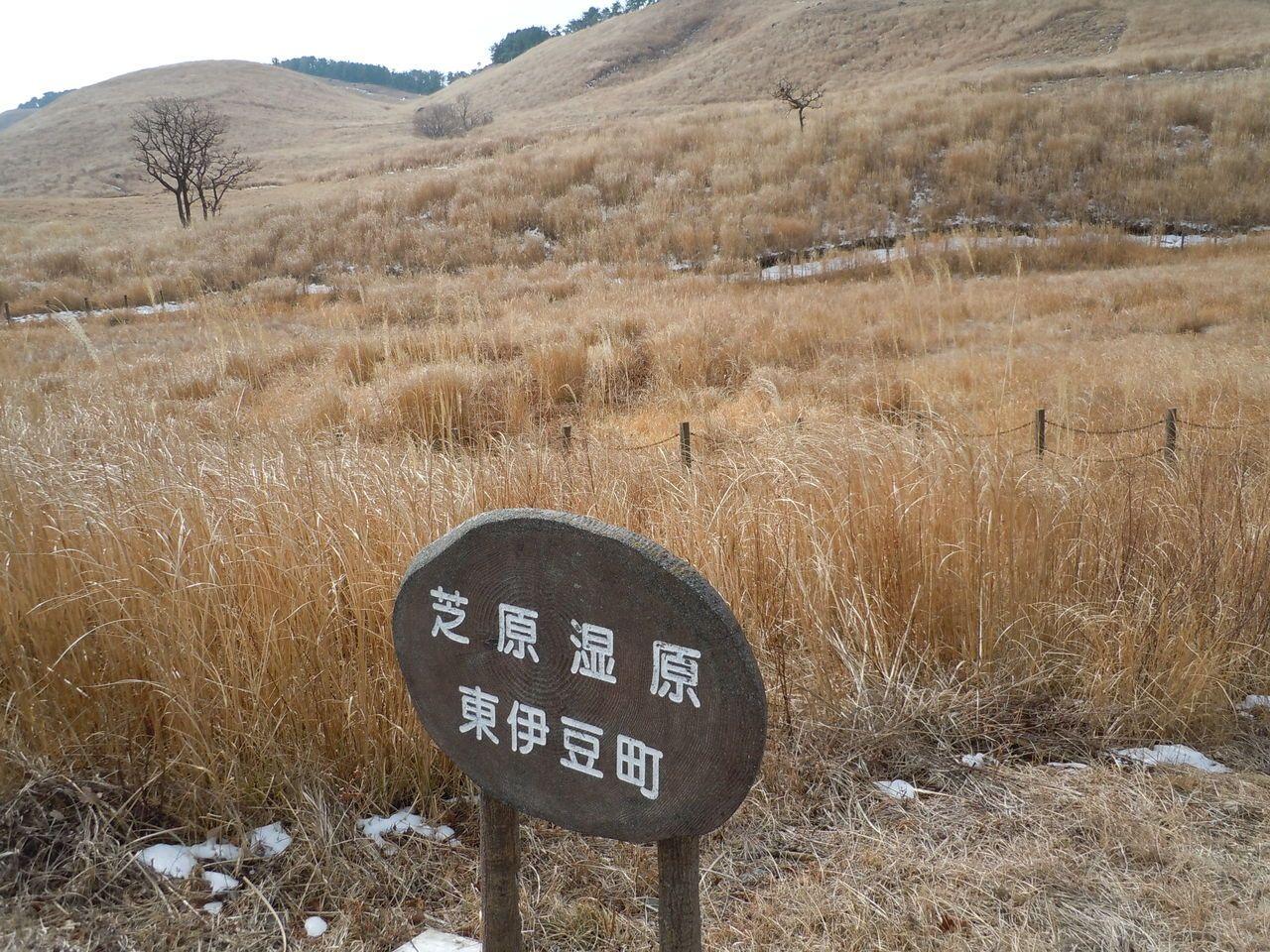 絶滅危惧種も!希少な植物の宝庫の湿原