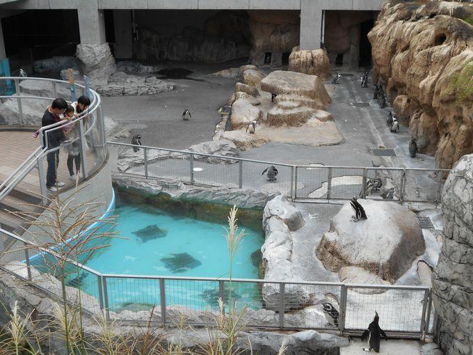長崎ペンギン水族館の温帯ペンギンゾーン
