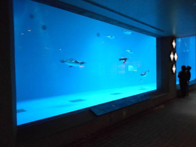 長崎ペンギン水族館のペンギン水槽