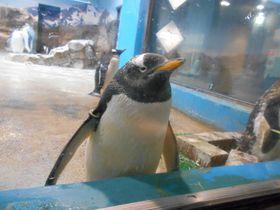 世界最多!9種類のペンギンを飼育展示「長崎ペンギン水族館」|長崎県|トラベルjp<たびねす>