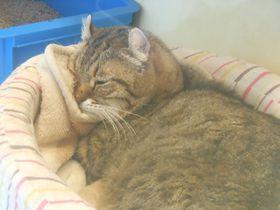 展示だけじゃない!猫と触れ合える!伊豆高原「ねこの博物館」|静岡県|トラベルjp<たびねす>