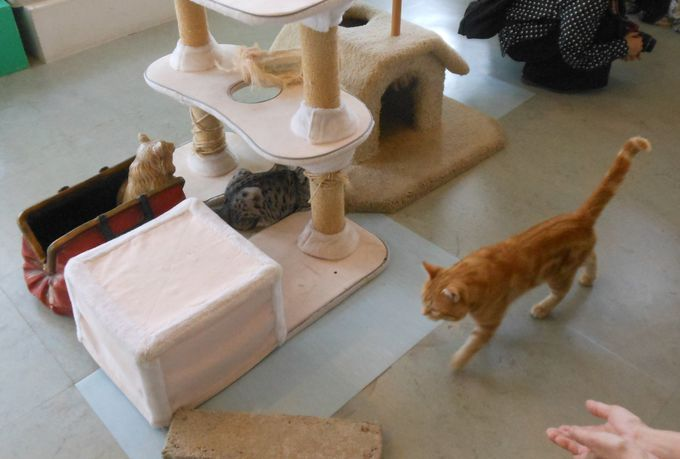 あなたは、どの猫がお好み?ニャンとも言えない可愛い猫に触れ合える!