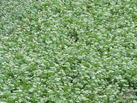 伊豆屈指の風景!早春の筏場「日本一のわさび田」|静岡県|トラベルjp<たびねす>
