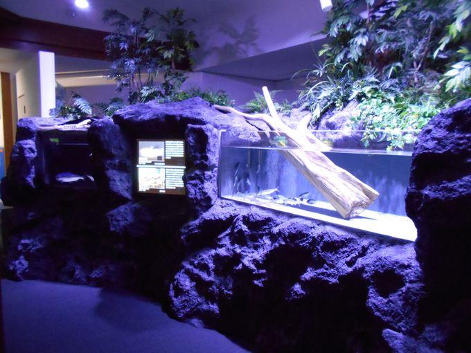 比較展示が面白い!西湖ジオラマ水槽