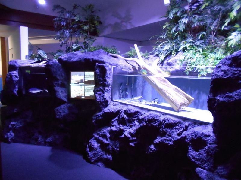 環境省レッドリスト入りの奇跡の魚!山梨県・西湖「クニマス展示館」