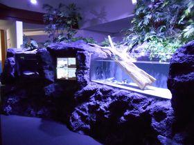 環境省レッドリスト入りの奇跡の魚!山梨県・西湖「クニマス展示館」|山梨県|トラベルjp<たびねす>