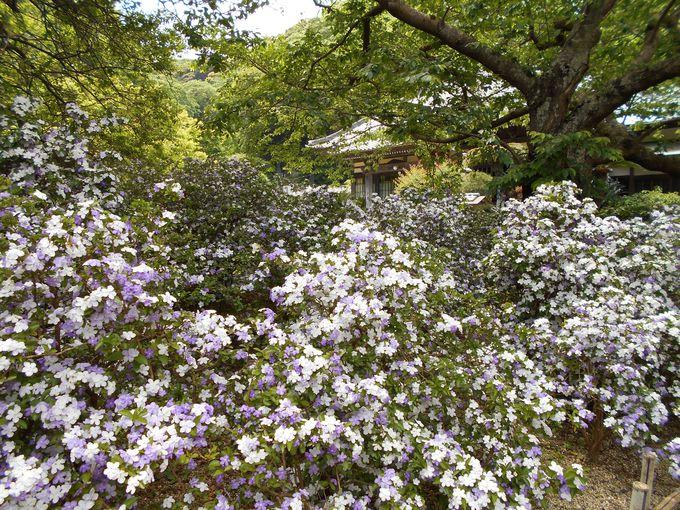 花の魅力は香り!フルーティーな匂いを体感してみて